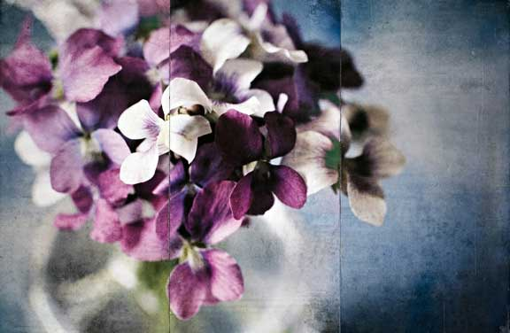 Violets, Jody Valentine Photographic Mixed Media